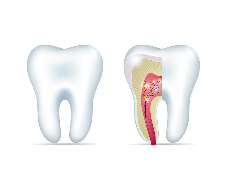 A Diagram Of The Inside Of Teeth | Pain-Free Root Canal St. Paul MN