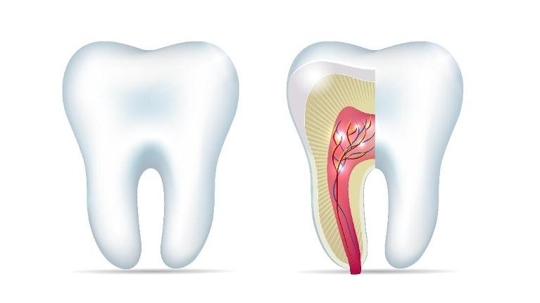 Root Canal | Saint Paul Dentist